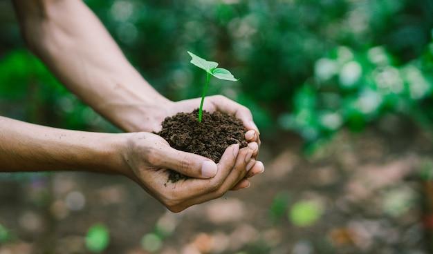 Hand met spruit voor groeiende plant