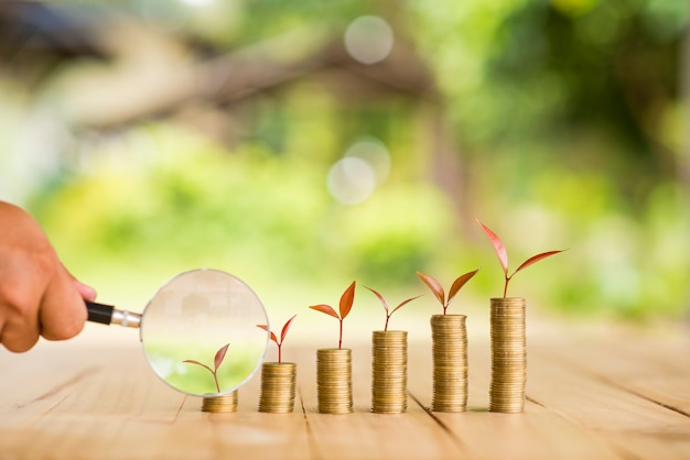 Hand met vergrootglas met geldgroeiende plant stap met deposito muntstuk. bank- en beleggingsconcept.