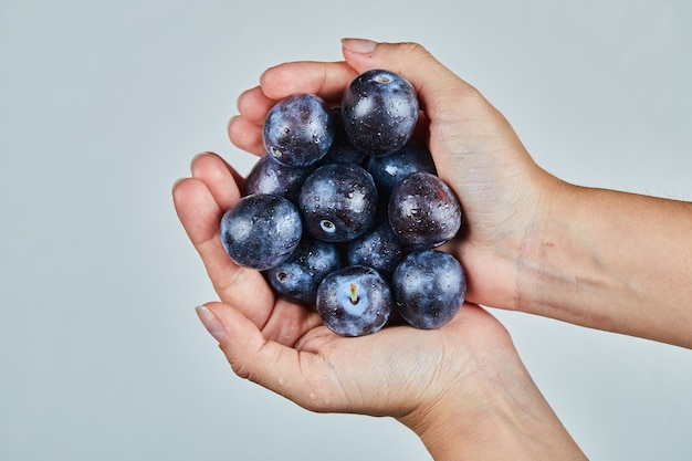 Hand met verse pruimen op grijs.