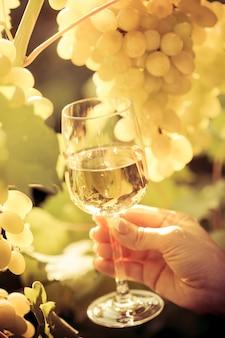 Hand met wijnglas en druiven van wijnstok in de herfst