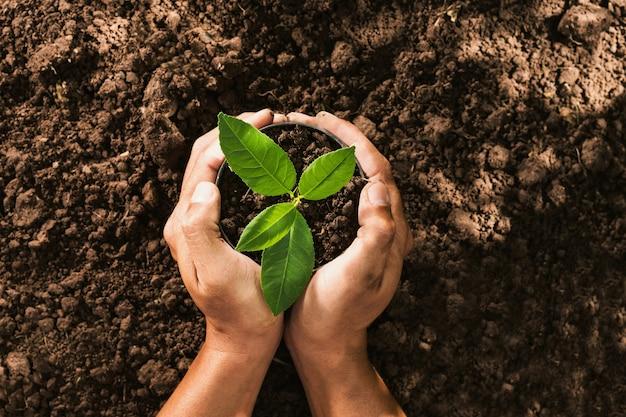 Hand met zaad boom in zak voor het planten in de bodem
