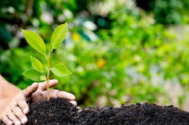 Hand plant jonge plant op aarde, natuurlijke energie en hou van het wereldconcept.