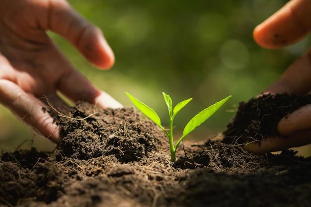 Hand planten in de tuin. aarde dag concept