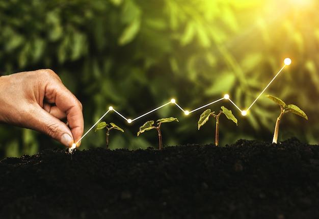 Hand planten zaailing groeiende stap in tuin met zonneschijn.