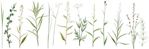 Hand tekenen aquarel set wilde bos bloemen, bladeren en takken. illustratie geïsoleerd op wit.