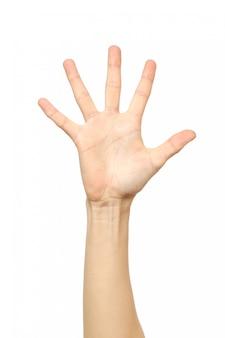 Hand tellen. vijf vingers. geïsoleerd