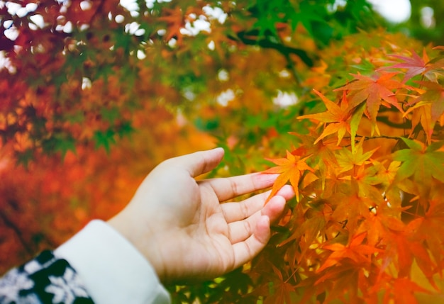 Hand touch show present autumn leaves