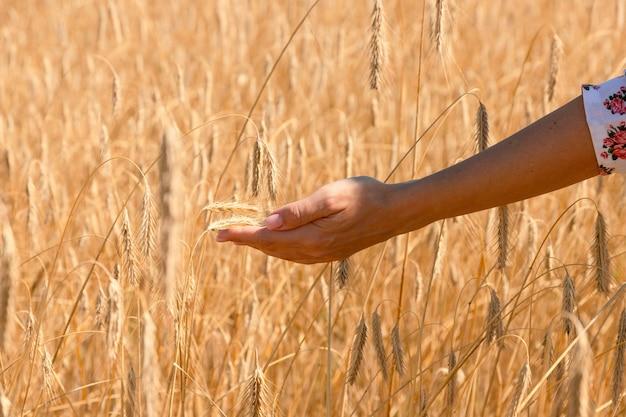 Hand van een jong meisje tegen de achtergrond van een tarweveld met korenaren en een blauwe hemel.