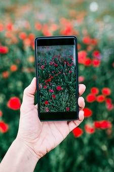 Hand van een jonge vrouw die een foto van een veld met poppy bloemen