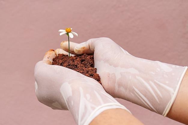 Hand van een persoon in plastic handschoenen die wat aarde vasthoudt met een madeliefje erin