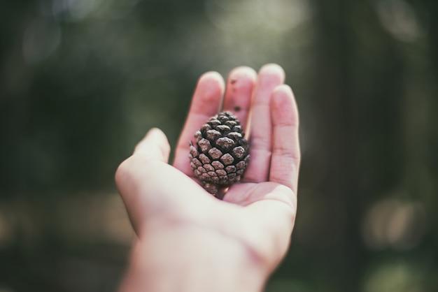 Hand van houd een pijnboomzaad met onscherpe achtergrond