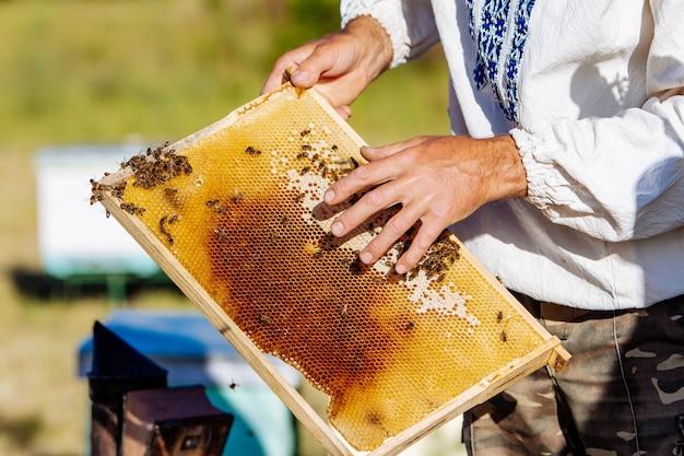 Hand van imker werkt met bijen en bijenkorven op de bijenstal. bijen op honingraten. frames van een bijenkorf