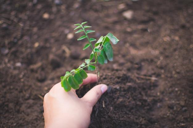 Hand van kinderen die installatie en grond met bokeh en aardachtergrond houden