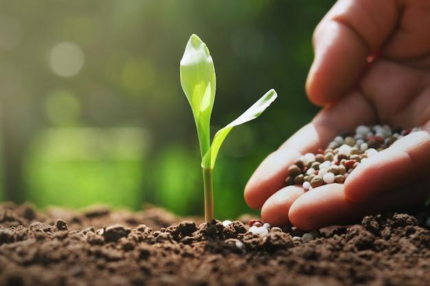 Hand van landbouwer giet chemische meststoffen voor jonge maïs in boerderij