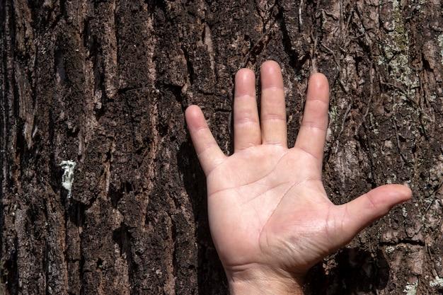 Hand van man op boomstam, in een symbolisch gebaar van genade en bescherming, in relatie tot de natuur
