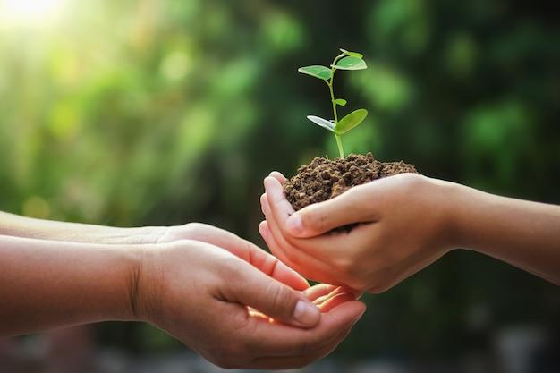 Hand van moeder en kinderen die jonge boom voor het planten in aardedag houden