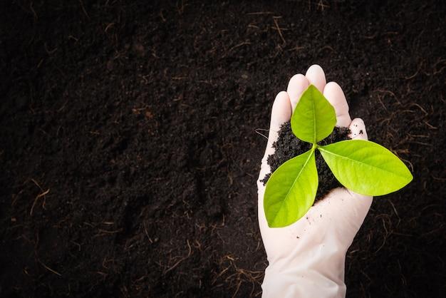 Hand van onderzoeker vrouw draag handschoenen zaailingen zijn een groene boom die groeit en plant in de vruchtbare grond op zwarte grond