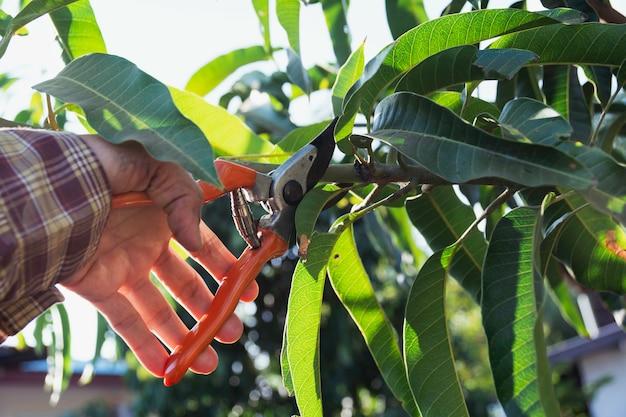 Hand van tuinman bomen snoeien met snoeischaar.