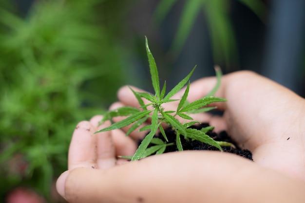 Hand van tuinman houdt cannabis klaar om te planten.