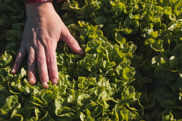 Hand van vrouw wat betreft een sla op een gebied Premium Foto