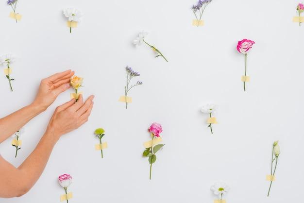 Handen aanraken van lentebloemen