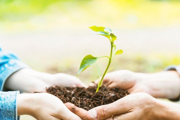 Handen bijsnijden met grond en zaailing