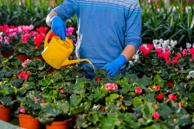 Handen bloemen uit een gieter water geven