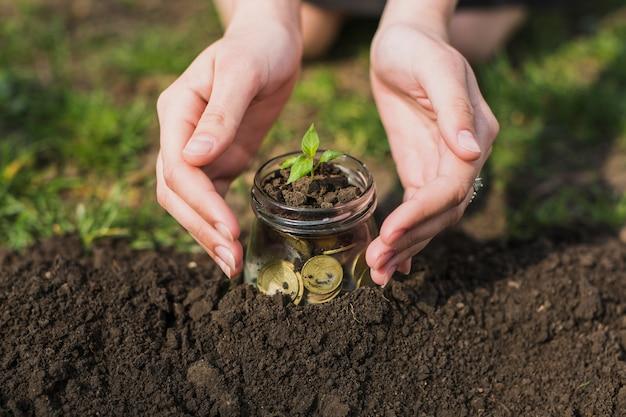Handen die boom met muntstukken planten