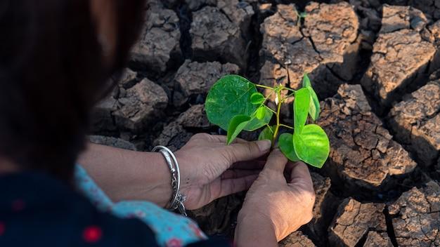 Handen die een boom houden die op gebarsten grond groeit, sparen de wereld, milieuproblemen
