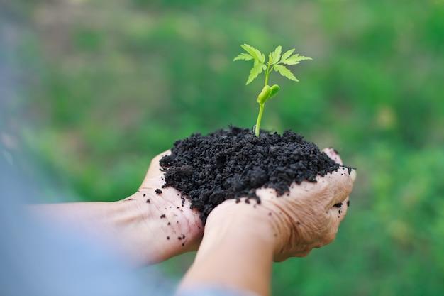 Handen die een groene jonge plant houden.