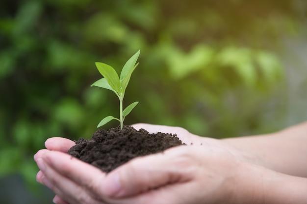 Handen die een groene jonge plant met zonlicht houden
