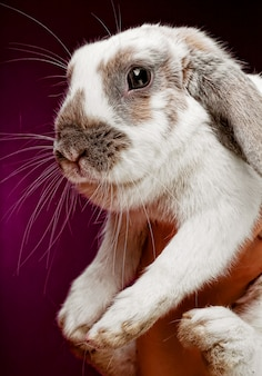 Handen die een konijntje op roze achtergrond houden