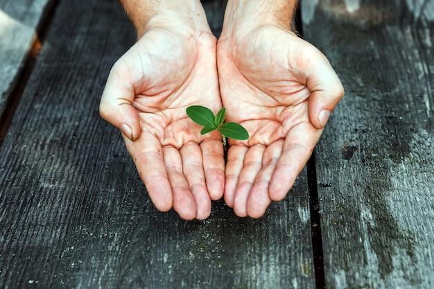 Handen die een spruit houden, een kleine plant die uit een boom groeit