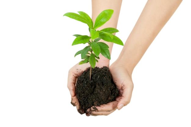 Handen die jonge plant op vruchtbare grond houden