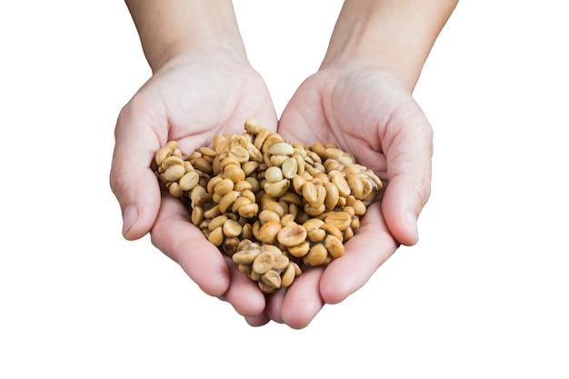 Handen die kopi luwak koffiebonen aanbieden
