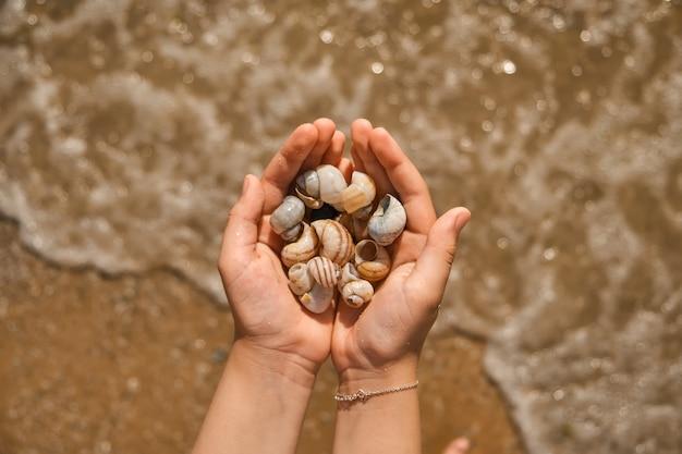 Handen die schelpen verzamelen op het zeestrand. close-up van kinderhanden met verzamelde schelpen over de zee. selectieve focus