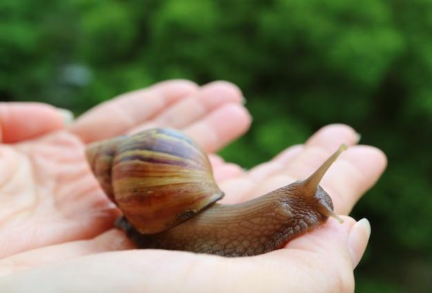 Handen die voorzichtig een kleine bruine slak terugbrengen naar de natuur
