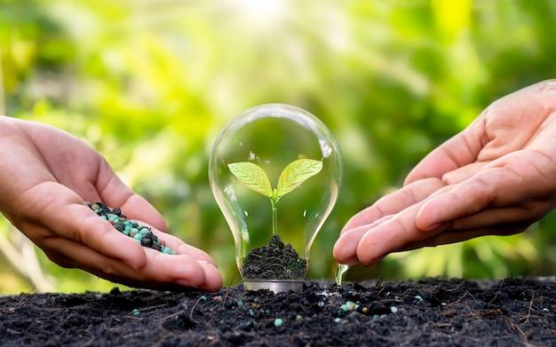 Handen en een kleine plant die groeit in een gloeilamp in de bodem met een wazige vegetatieachtergrond