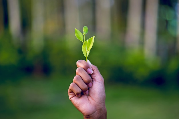 Handen en groene bladeren mooie groene lommerrijke piek