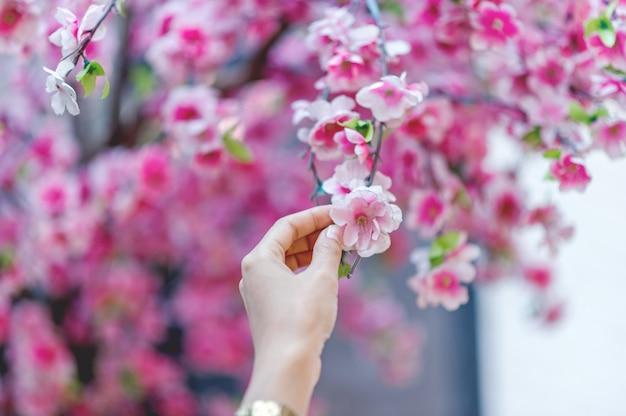 Handen en mooie roze kersenbloesems de ideeën van de aardreis met exemplaarruimte