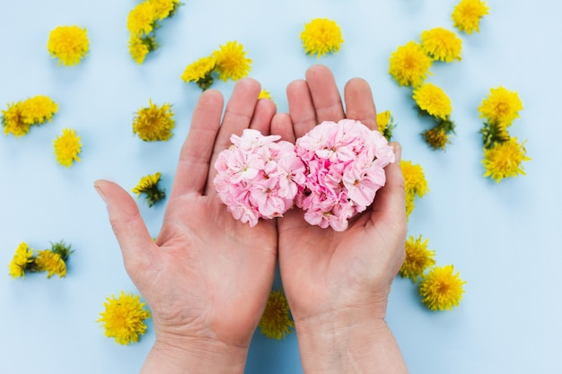 Handen houden heldere bloemen op pastelblauw