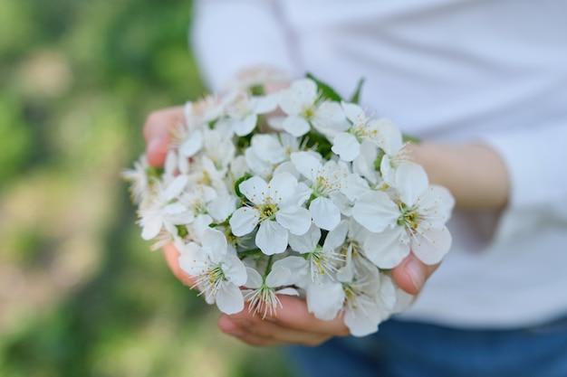 Handen met bloeiende witte kersenbloemen