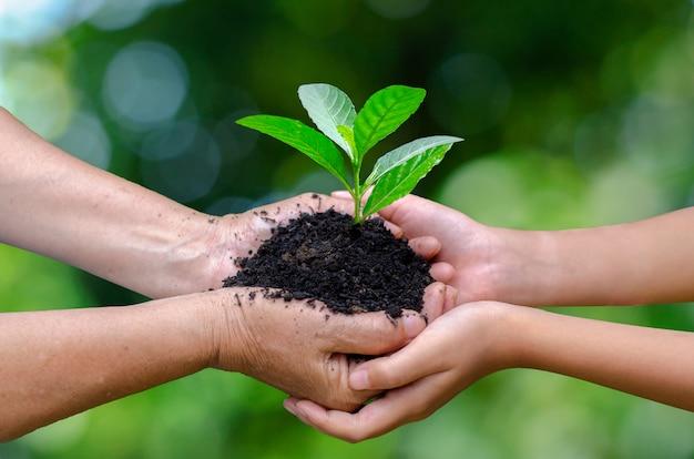 Handen met groeiende zaailingen