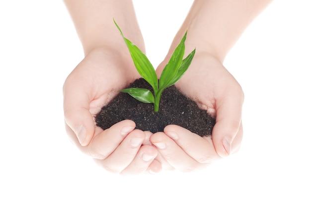 Handen met groene kleine plant nieuw leven concept