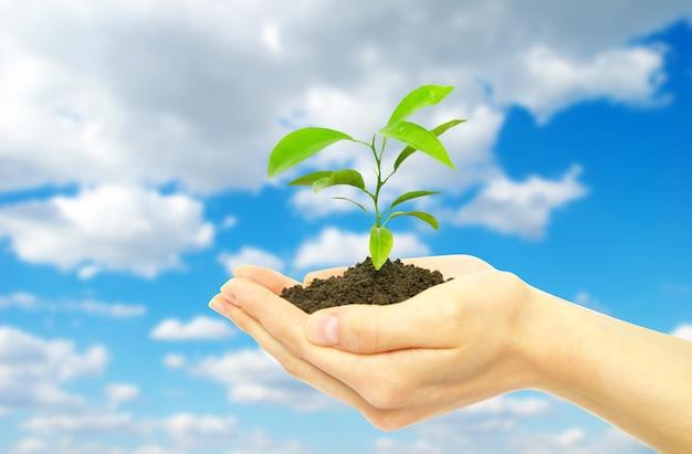 Handen met jong boompje in de grond op de lucht