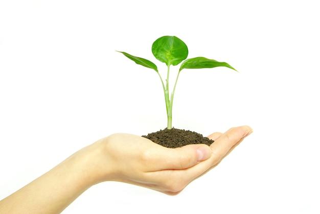 Handen met jonge boom in de bodem op wit