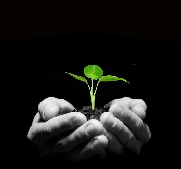 Handen met jonge boom in de bodem