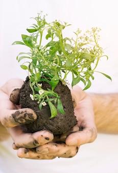 Handen met natte grond en plant