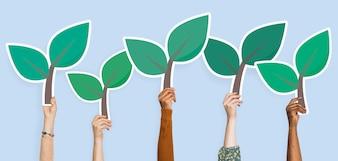Handen met plant bladeren clipart