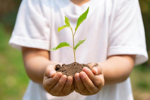 Handen met plant in de bodem
